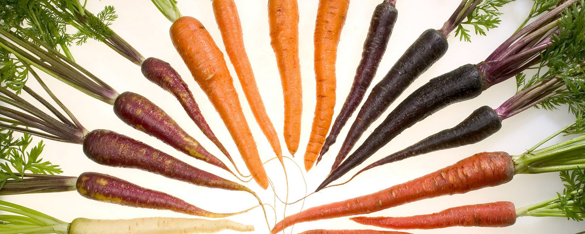 cropped-carrots_of_many_colors.jpg